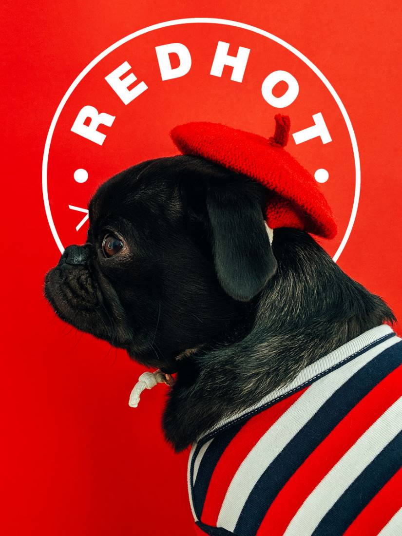 A black pug wearing a red beret infront of the Red Hot Penny logo